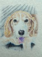 Commission: Tracy's Beagle by TheArtistAlicia
