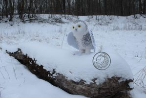 New snowy owl.. by Sillykoshka