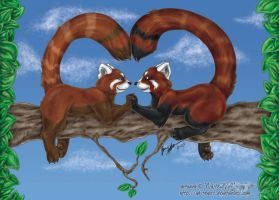 V-Day pic 1 - Red Pandas by whitewolf