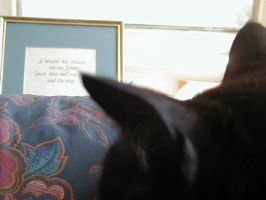 The Cat Dimension: Ears by annwyd