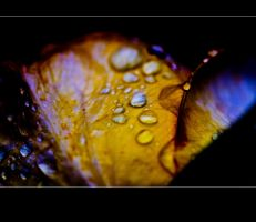 Autum 2009 .... by Rob1962