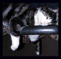 Darn Cats In My Chair Aagain by Mz-Kitts