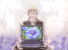 :APH: A Cornflower Spring by Inupii