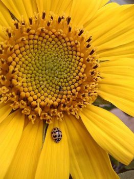 Perfect YELLOW with a lady bug by girlinmymirror01