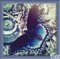 blue butterfly by KnightsNymph
