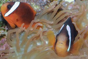 Rubbing on sea anemone by Treekami