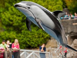 Leaping Dolphin by MichelLalonde