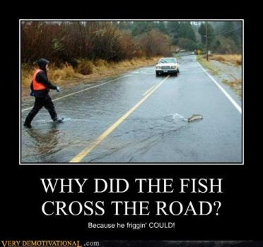 Why Did The Fish Cross The Road by iWyldIce