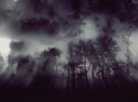 spooky Fog in the Forest by septle2