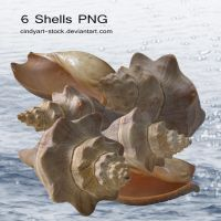 Shells by cindysart-stock by CindysArt-Stock