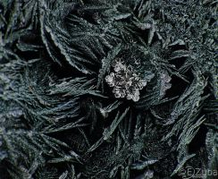 frost crystals by efeline