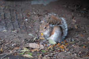 I hid these nuts, but then I ated them all. by Azgard2274
