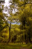 Northumberland Woodland 4 by newcastlemale