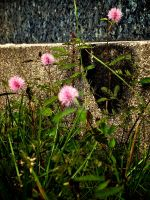 Wild Flowers by SCKW