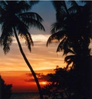 palm trees in sunset by Insensitive-beauty