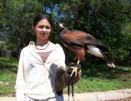 Falconry Stock 8 by austringer