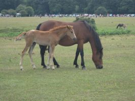 Wild Ponies in England by MAKENNAW12