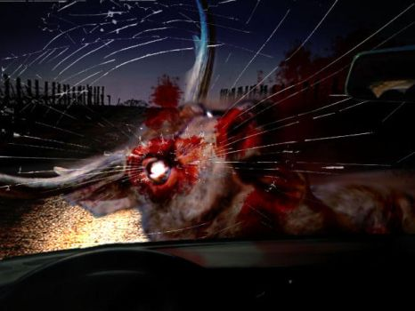 Deer on the headlights by Go0mba