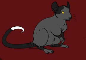 Patch Rat by Rosewolf86