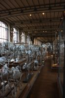 natural history museum VI by Miyu-Maneki
