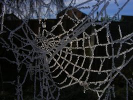 Frosted Web1 by Tasastock