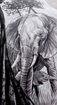 africa detail 4 by FDupain
