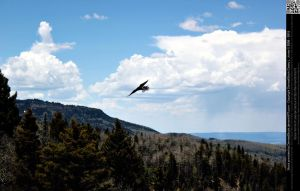 Crow Flying Over Mountain Landscape by DamselStock