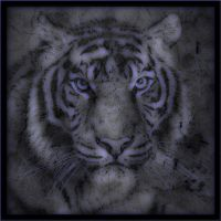Tiger 2 by ThaisMagicPower