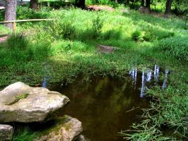 pond 02 by Pagan-Stock