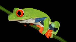 Tree frog - digital painting by Giselle-M