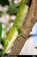 Lizard on a Branch 01 by phantompanther