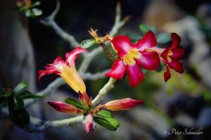 From the beautiful world of plants(0855). by Phototubby