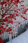 Winter Berries Iced Over by BlueSolitaire