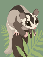 Vector sugar glider by the-snow-fox