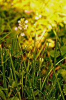 Spring in Maine 2012. View From A Blanket by spilltheink