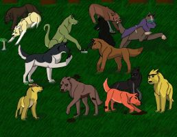the wolfcast by alicesapphriehail