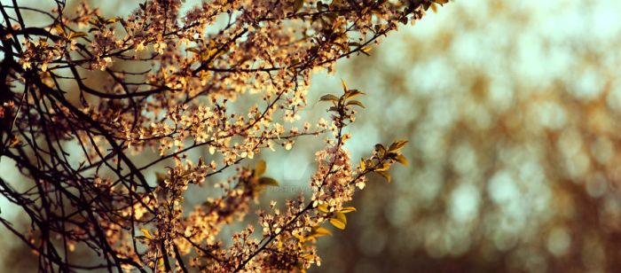 Dreams of Spring by 7DS7