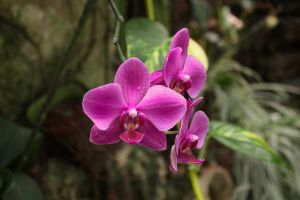 orchids in Utopy park by zu-sha