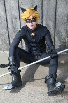 Chat Noir- This black cat just crossed your path by twinfools