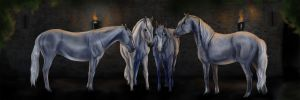 Four Lipizzan Mares by life-d-sign