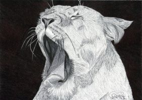 Tired Ballpoint Lion by Cindy-R