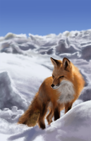 Fox Photo Study by ForrestImel