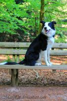 Flash posing on the Bench II by Maryl0u
