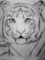 Tiger sketch by zaboo17