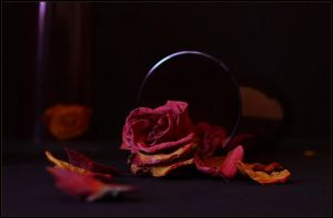 the roses 2 by An-gora