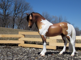 Breyer - Adelaide Pinto Mare by The-Toy-Chest