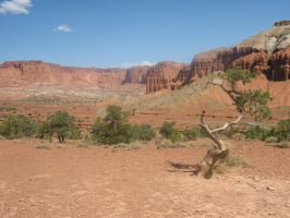 Capitol reef park by Cam-s-creations