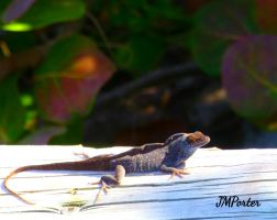 Lounge Lizard by JMPorter