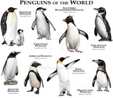 Penguins of the World by rogerdhall