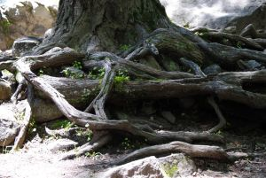 Roots of a Tree by otherworldartist